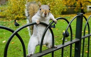 My Anti-Spirit Animal: The Campus Squirrel