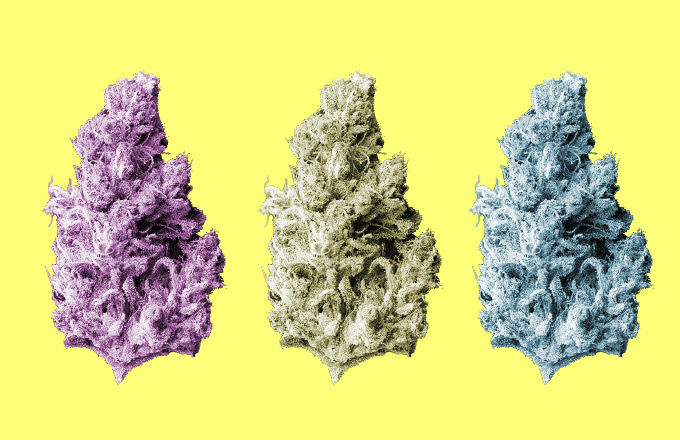 What Your Favorite Strain Says About You