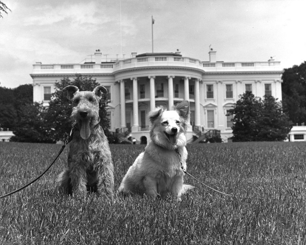 Dogs and Dog Shit on America's Front Lawn
