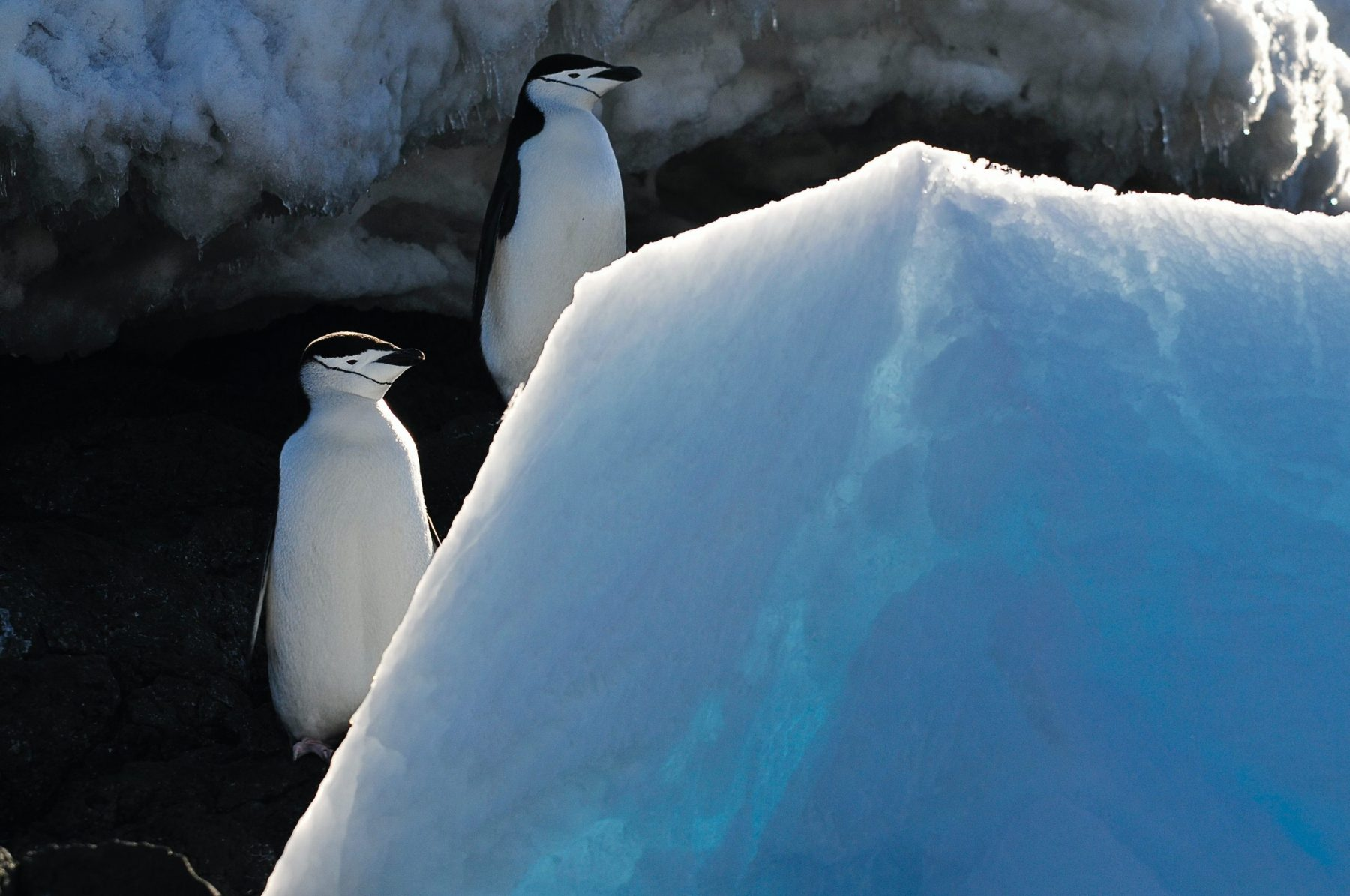 In an article about bizarre research papers, a photo of two penguins