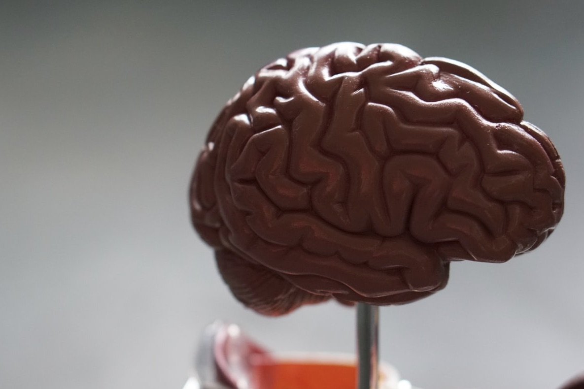 Image of a brain model in an article about Kimberley Wilson's approach to nutritional and mental health.