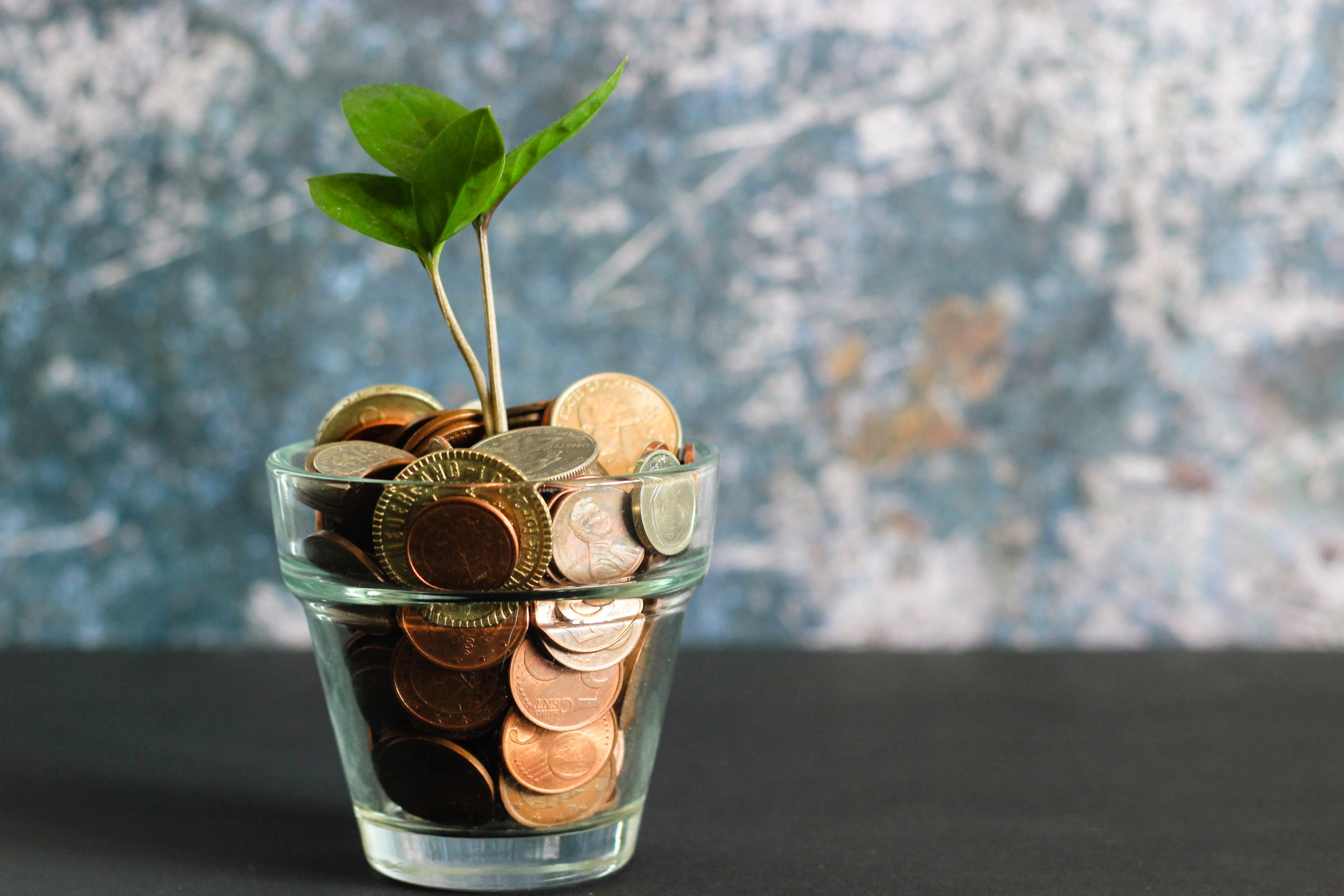 a potted plant filled with money and coins