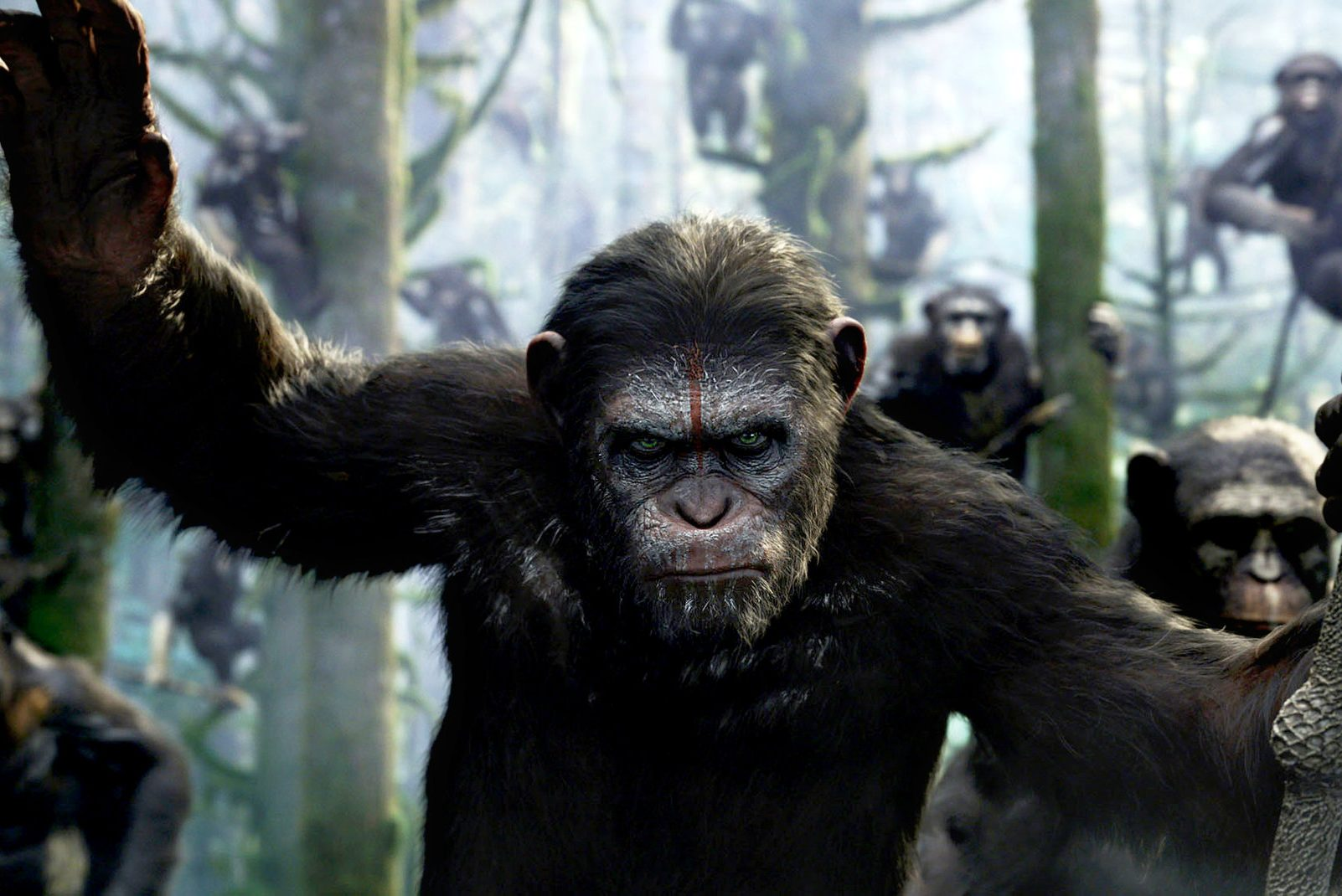 A still from the most recent addition to the Planet of the Apes trilogy.